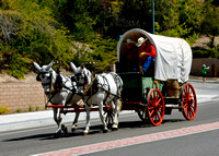 Mule-Drawn Wagon